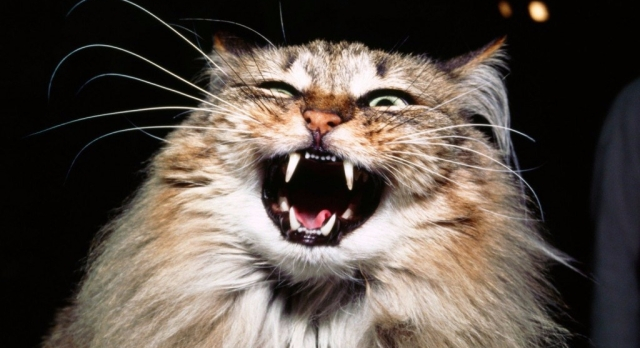 20-of-the-most-evil-cats-youll-ever-see-11.jpg