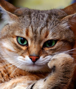 smug cat2