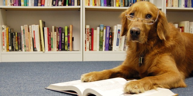 DOG-READING-A-BOOK-facebook